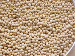 Soybean Production in Arkansas