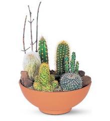 Cactus Garden Plant TF142-2