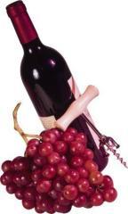 Wine Pinot Noir 2010