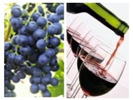 Wine Cabernet Franc 2010