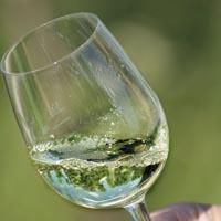 Wine Gewürztraminer 2010
