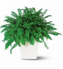 Decorative Fern Plant TF136-1