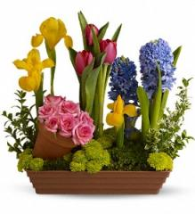 Spring Favorites Flowers T149-1A