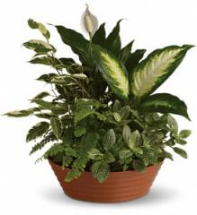 Serene Retreat Plant T100-3A