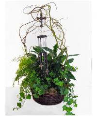 Tribute European Garden Plants Basket