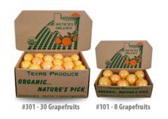 Standard Size Grapefruit
