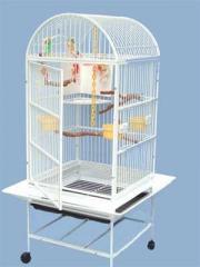 Bird Cage, Mango