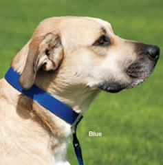 All Weather Dog Collars