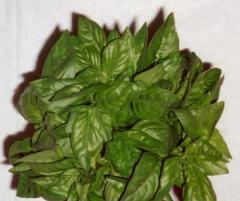 Basil, Spicy Globe