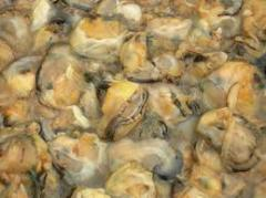 Oyster Meats