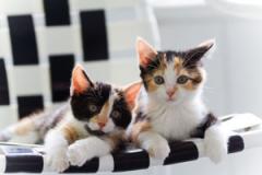 Cat & Kitten Supplies