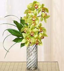 Chic Cymbidium Orchids