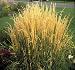 Semillas de plantas decorativas