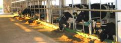 Tie Stall Milking Systems
