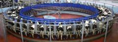 Milking Systems Swiftflo Revolver Rotary
