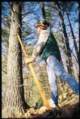 Tree Harvesting Tool