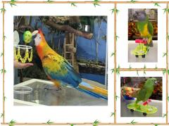 Bird & Parrot Trick Training Toys