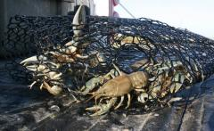 Crawfish: Nets, Traps, Wire