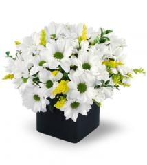 Daisy Delight Bouquet