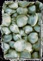 Littleneck Clams- Raft-Purged (dozen)
