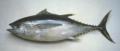 Bigeye Ahi (Bigeye Tuna)