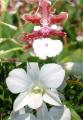 2 Exotic Orchid Рlants