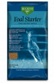 Foal Starter