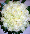 Snowball Roses