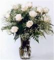 TF-RO-06 White Roses