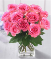 1 Dozen Medium Stem Pink Roses