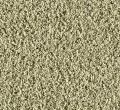 Posh Boutique Mohawk Carpet