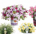 Foolproof ColorTM, Supertunia®, King Tut® ,Diamond Frost® , Supertunia® Citrus & Snow Princess® Flowers