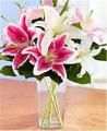 Winter Lilies