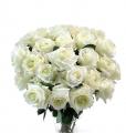 Snow Queen Roses