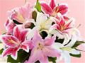 Deluxe Winter Lilies