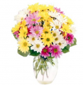 Assorted Daisies Bouquet