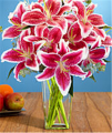 Deluxe Holiday Stargazer Lilies