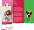 Large Tri-Fold Brochures