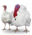 B.U.T. 6 Turkey