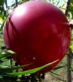 Large Crystal Burgundy Balloons 17