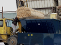 Processing Green Softwood Waste to Burner Fuel