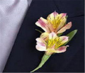 Double Alstroemeria Lily Boutonniere