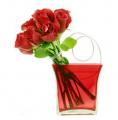 Roses Contempo