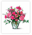 Alstroemeria Carns and More
