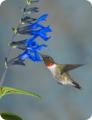 Wild Bird Supplies