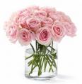 Flower Pink Roses