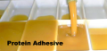 Protein Adhesive