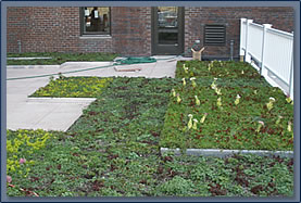 Order LiveRoof Vegetative Modules