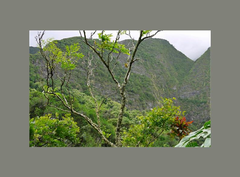 Order Magnificent Maui Tour