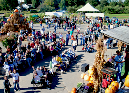 Order Fall festivals